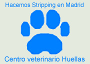 Centro veterinario Huellas. Trimming del Schnauzer en Madrid