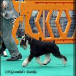 Candidato perro del año 2014 - Gwendal Eureka